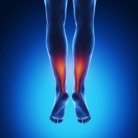 The Purpose of the Achilles Tendon